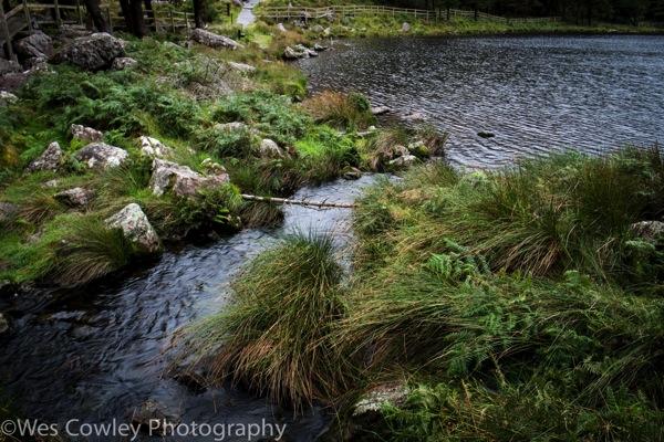 Glanteenassig creek