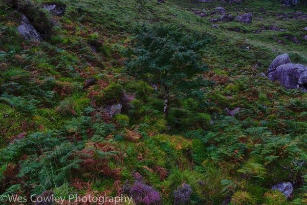 Glanteenassig enchanted forest 4