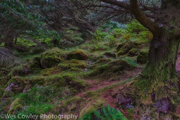 Glanteenassig enchanted forest