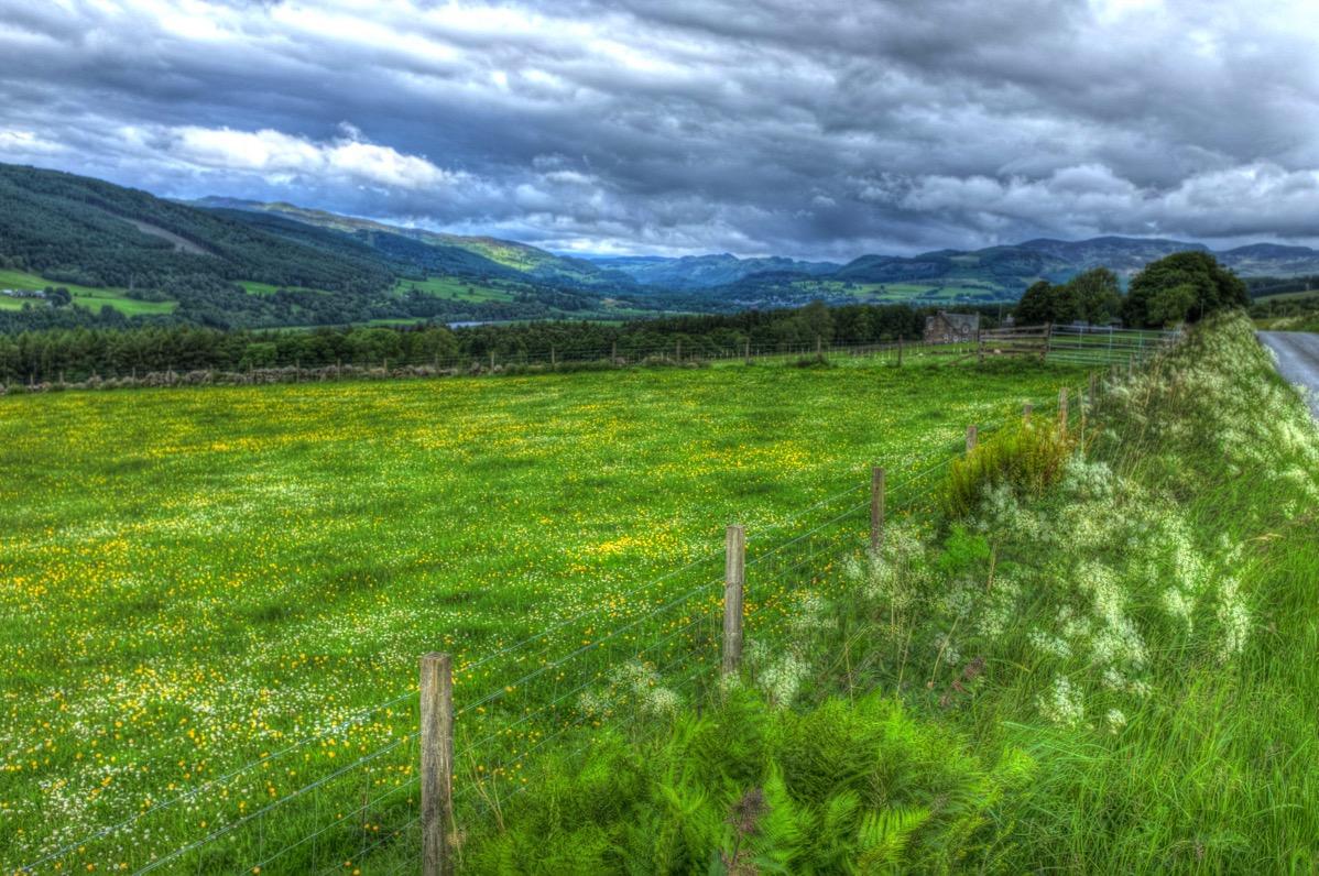 Perthshire field