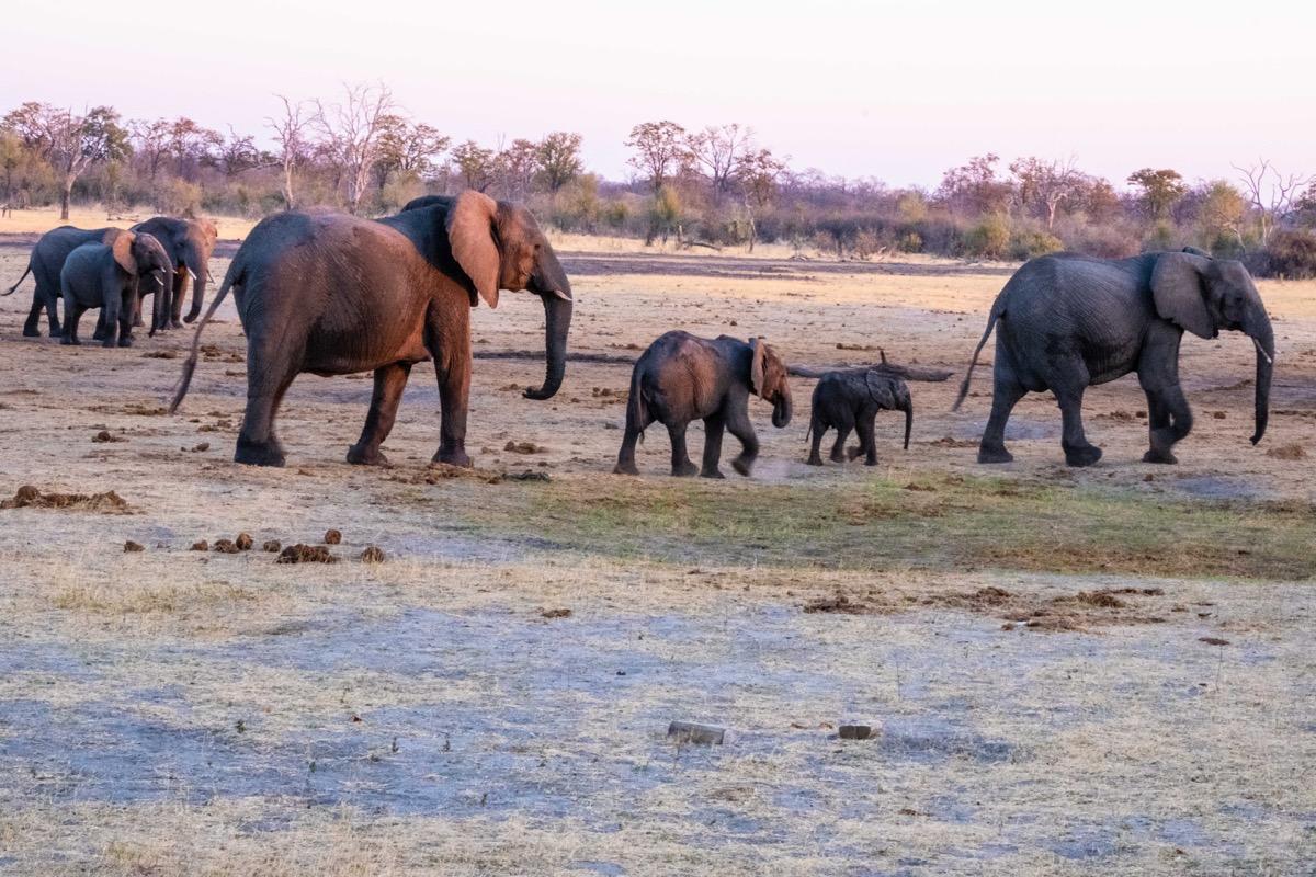 4 elephants