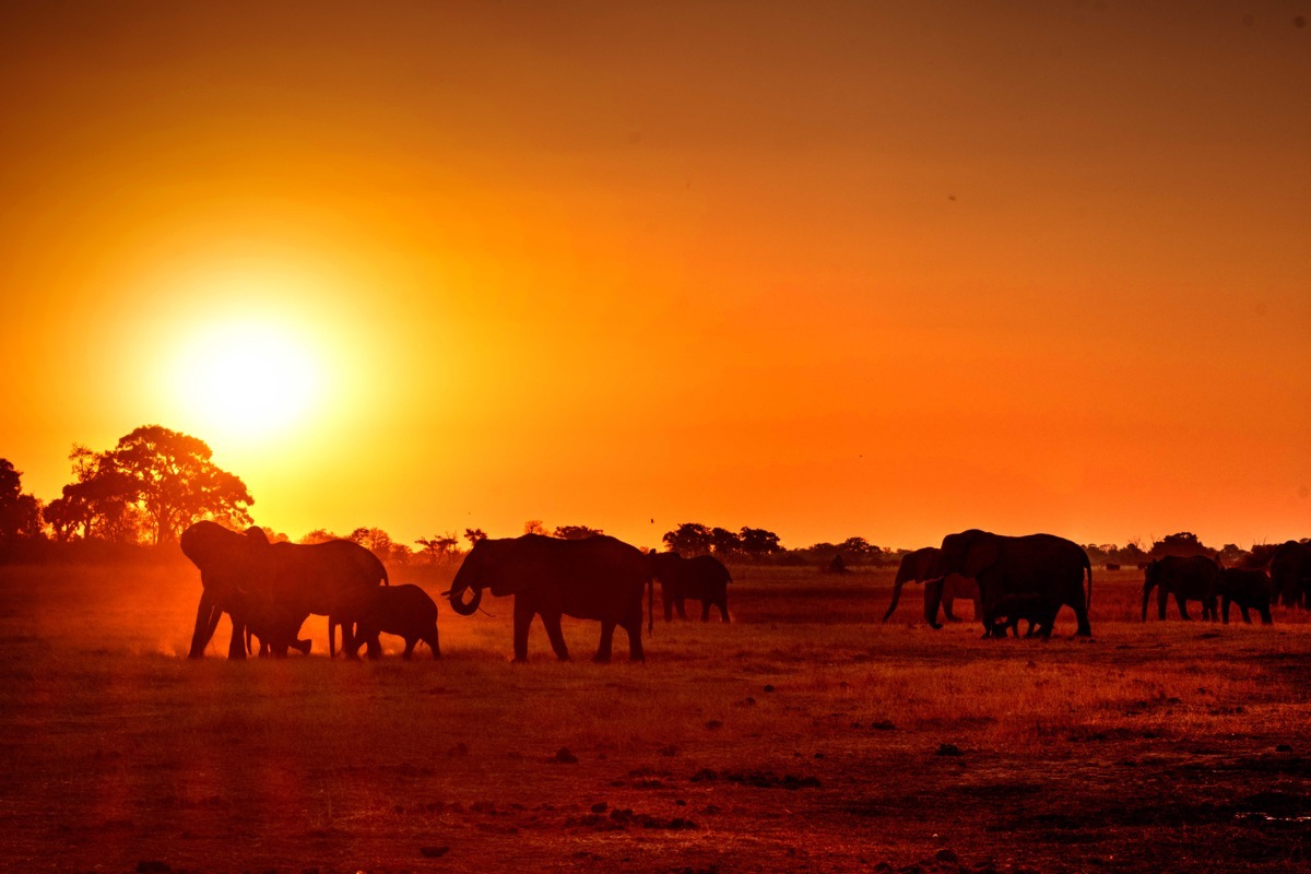 Elephants at sunset 2