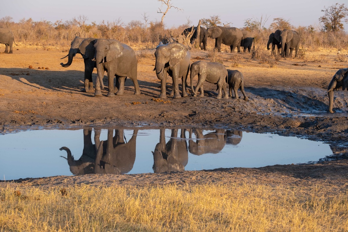 Elephants reflected in pool