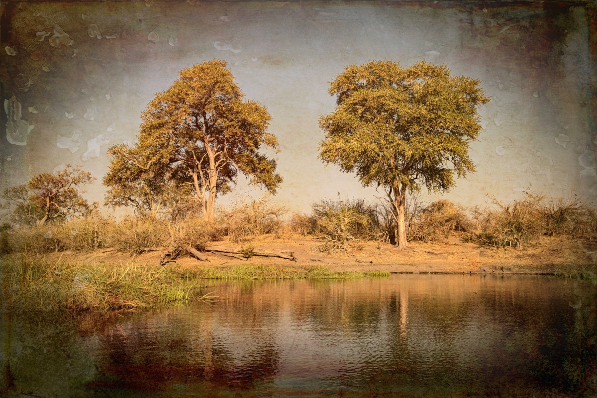 Trees on the bank texture